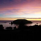 Another Goat/Bird Island at Sunset by Sheri Scherbarth