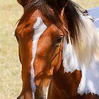 Crazy Horse by Trevor Murphy