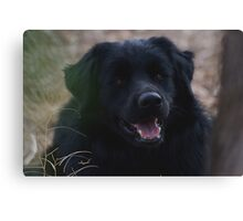 Portrait of a companion Canvas Print