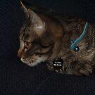 Kitten Jasper ~ Always alert and ready for fun by Jan  Tribe