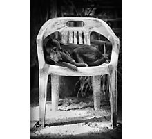 Ol' Chap on his throne... Photographic Print