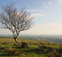 Lone tree on the edge of Exmoor by peteton