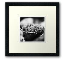 The Pot Framed Print