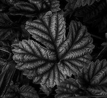 Forest Floor by Jeffrey  Sinnock