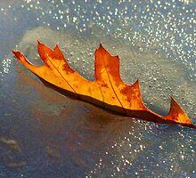 Echos of Fall   by Thomas Stevens