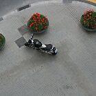 Corner Parking by lisaacs