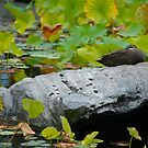 Duck-a-Chillin by Hughsey