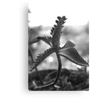 Random Plant Day Canvas Print