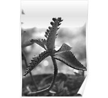 Random Plant Day Poster