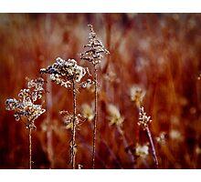 Winter Weeds Photographic Print