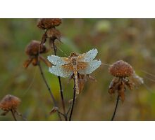 Dragonfly near St Peter, MN Photographic Print