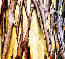 Peeling gum-tree revealing new bark. by ronsphotos