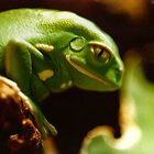 Green Frog by eternal86