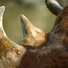 Rhinoceros  by eternal86