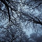 Blue Branches by Terence J Sullivan