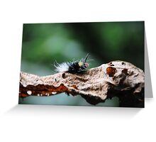 Red Head Caterpillar - Bwindi Impenatrable National Park , Uganda Greeting Card