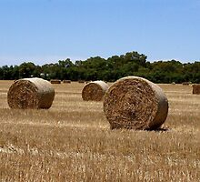 Harvest by Maryanne Lawrence