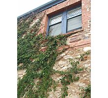 Window Creeper Photographic Print