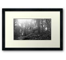 Bush showpony Framed Print