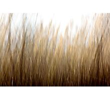 Tall Grass Photographic Print