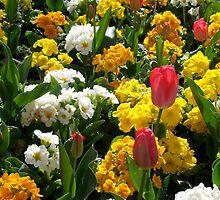 Bloom by franklyroo