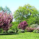 Row of Flowering Trees by Susan Savad