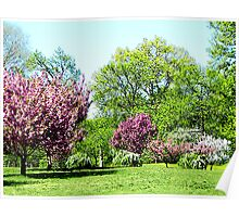 Row of Flowering Trees Poster