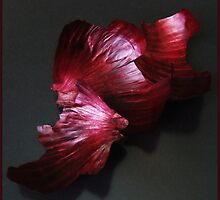 Onion's dress by Bluesrose