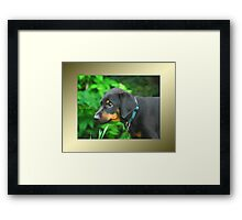 Dexter in serious thought Framed Print