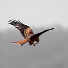 Feeding on the Wing by Norfolkimages