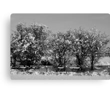 Tree's & Fence Canvas Print