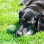 The Old Man and His Ball by Jim Terry