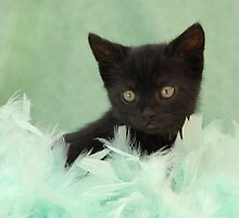 black kitten in green feathers by sarahnewton