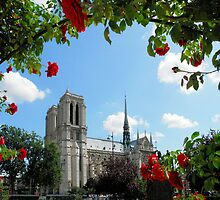 A Red Rose for the Lady - Notre Dame by worldtripper