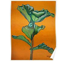 Large leaf plant in acrylic Poster