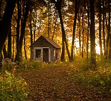Shack in the Woods by Rick Stockwell