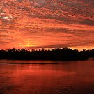SW Florida Early Mornings by Virginia N. Fred
