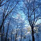 Winter trees by Derek Smith