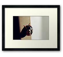 A Beetle Framed Print