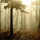 Golden Foggy Forest by NatureGreeting Cards ©ccwri