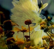 Glory in the Sun (2) by Lozzar Flowers & Art