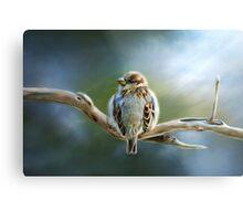 English-House Sparrow Metal Print