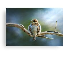 English-House Sparrow Canvas Print