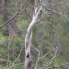 Possum home in green forest by rattyandpossum