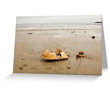 Bird Food ~ Lyme Regis Greeting Card
