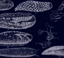 Manual of the New Zealand Mollusca by Henry Sutter 1915 0133 Delos Athoracophorus Inverted Sticker
