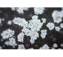 Lichens in infrared Photographic Print