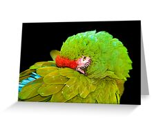 Military Macaw (Ara militaris) Greeting Card