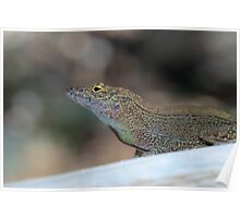 Crested Anole Poster