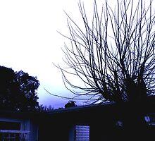 Spines in the Sky by Steven Maynard